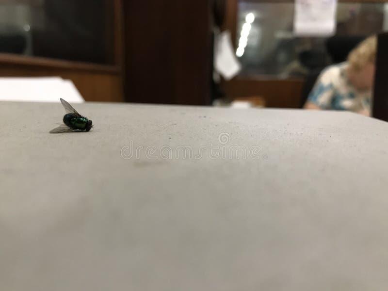 Μια νεκρή μύγα πάνω από μια γκρίζα επιφάνεια με μια επιχειρησιακή γυναίκα στο υπόβαθρο στοκ φωτογραφία