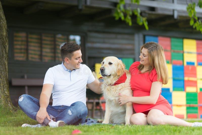 Μια νεολαία συνδέει την αναμονή του μωρού με το χρυσό retriever τους σκυλί στοκ εικόνες