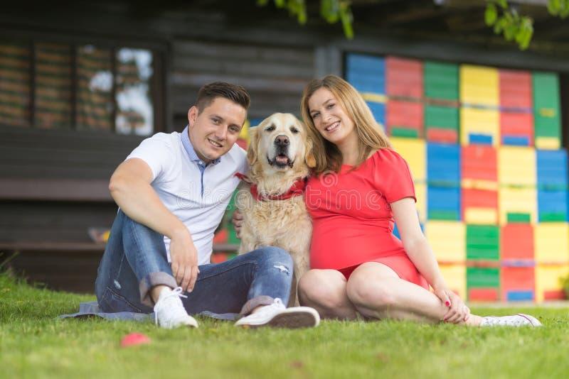 Μια νεολαία συνδέει την αναμονή του μωρού με το χρυσό retriever τους σκυλί στοκ εικόνα