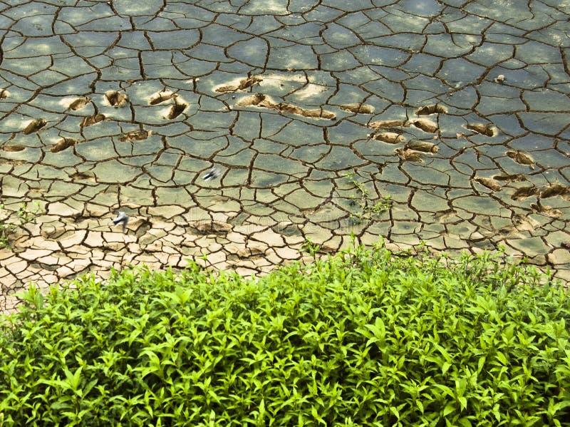 μια ξηρά κοίτη του ποταμού στοκ εικόνα