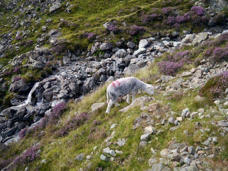 Μια ξηρά σοφίτα Beck που καταλήγει από Ennerdale στοκ εικόνα
