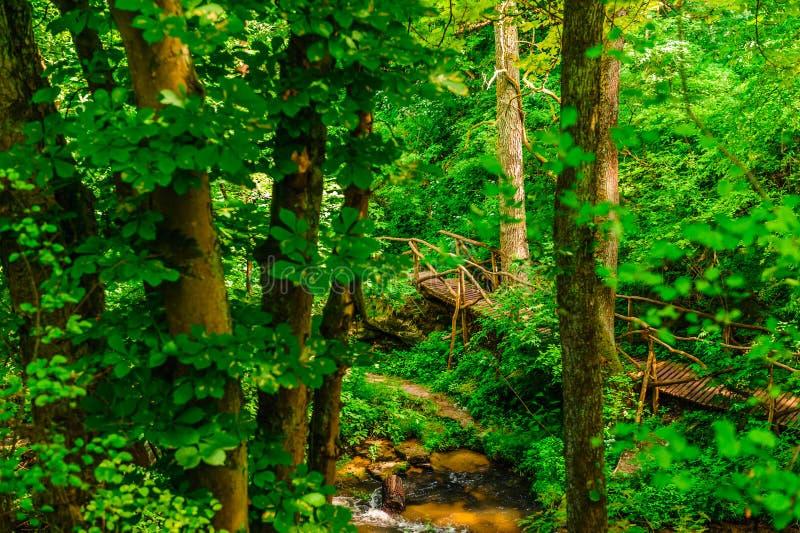 Μια ξύλινη πλατφόρμα επάνω από τον ποταμό στοκ εικόνες με δικαίωμα ελεύθερης χρήσης
