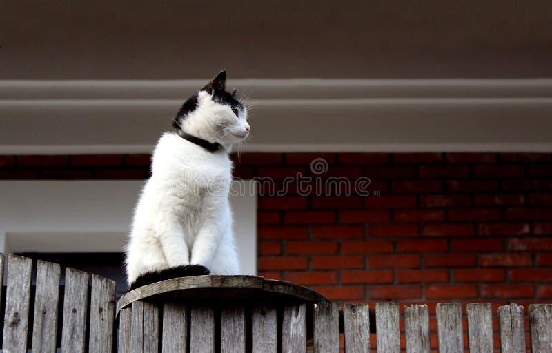 Μια οκνηρή γάτα κάθεται σε έναν φράκτη και κοιτάζει lazily στην απόσταση στοκ φωτογραφίες
