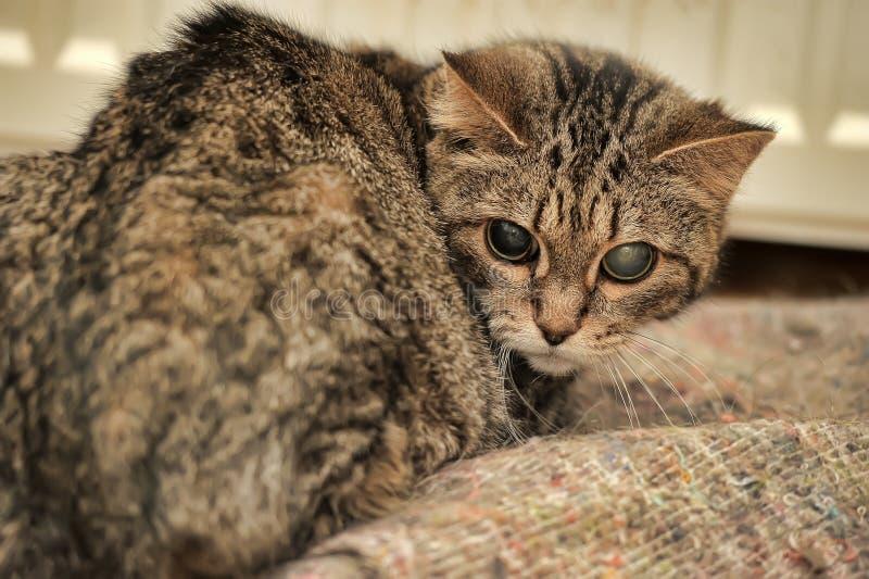 Μια παλαιά γάτα στοκ φωτογραφία με δικαίωμα ελεύθερης χρήσης
