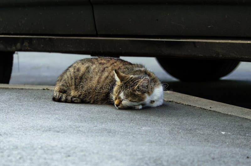 Μια περιπλανώμενη γάτα κοιμάται κάτω από ένα αυτοκίνητο στοκ εικόνες