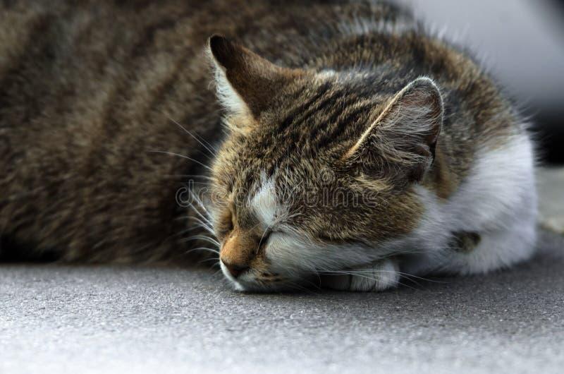 Μια περιπλανώμενη γάτα κοιμάται κάτω από ένα αυτοκίνητο στοκ φωτογραφίες με δικαίωμα ελεύθερης χρήσης