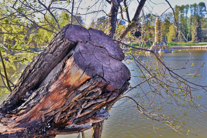 Μια πηγή δέντρων και κολοσσών Αρχιτεκτονική του πάρκου VDNKH στη Μόσχα Κύριος αριθμός 0ne περίπτερων στοκ εικόνες