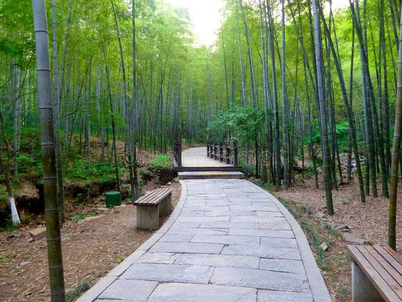 Μια πορεία πετρών μέσω ενός δάσους μπαμπού στοκ εικόνες