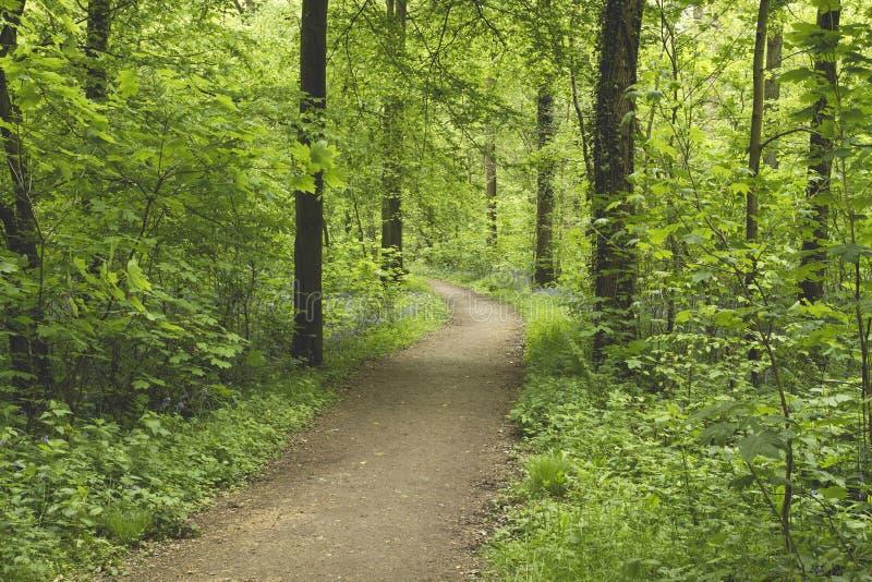 Μια πορεία ποδιών σε ένα πράσινο δάσος άνοιξης στοκ φωτογραφίες