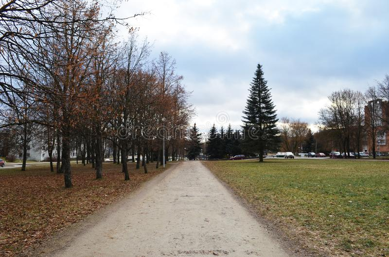 Μια πορεία σε ένα πάρκο φθινοπώρου μεταξύ των σημύδων στοκ φωτογραφία