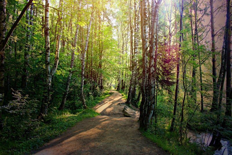 Μια πορεία στο δάσος που φωτίζεται από τον ήλιο που λάμπει μέσω των φύλλων των δέντρων στοκ εικόνα