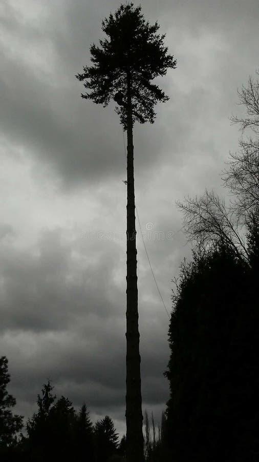 Μια πτώση δέντρων στοκ εικόνες