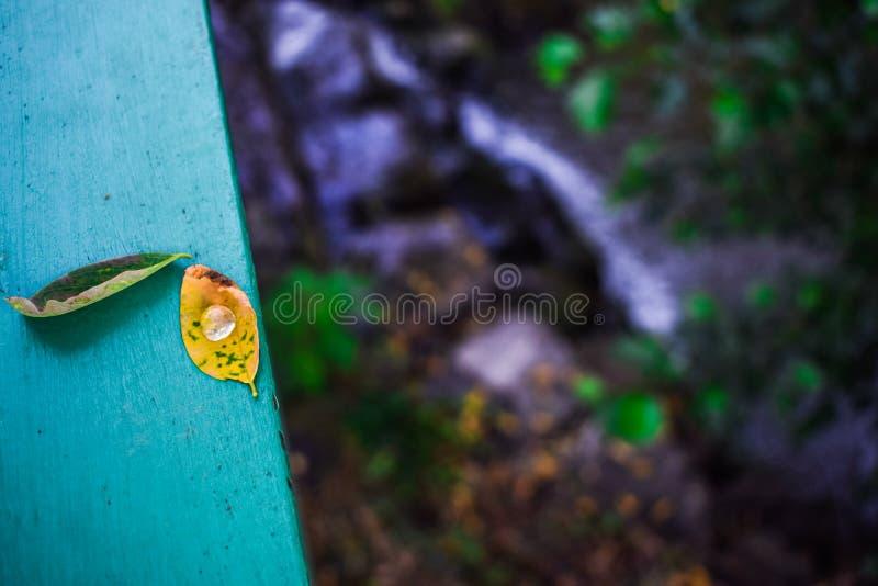 Μια πτώση του νερού μέσα σε μια άδεια στοκ εικόνες με δικαίωμα ελεύθερης χρήσης