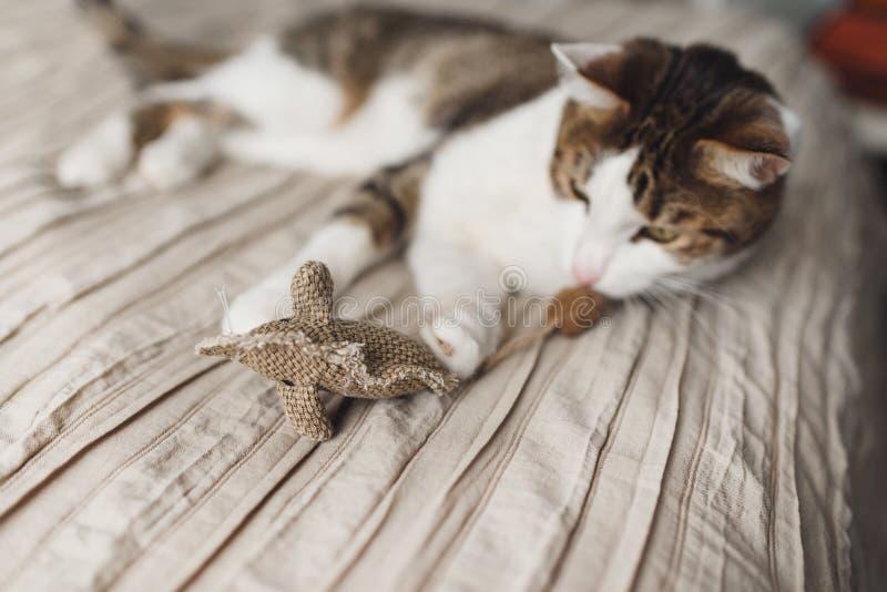 Μια ριγωτή ενήλικη γάτα βρίσκεται στο κρεβάτι και το ποντίκι παιχνιδιών παιχνιδιού στοκ εικόνες