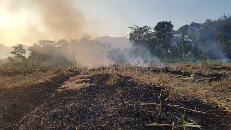 Μια ριπή του καπνού στα αγροκτήματα καλάμων ζάχαρης στοκ εικόνες