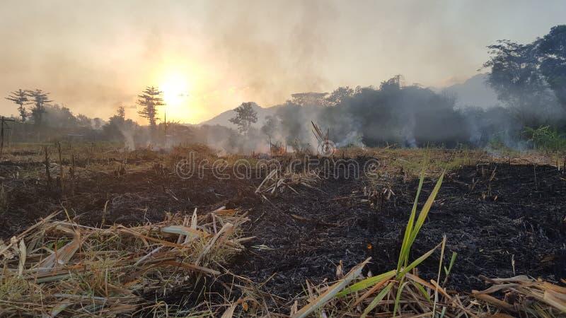 Μια ριπή του καπνού στα αγροκτήματα καλάμων ζάχαρης στοκ φωτογραφία με δικαίωμα ελεύθερης χρήσης