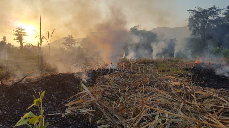 Μια ριπή του καπνού στα αγροκτήματα καλάμων ζάχαρης στοκ εικόνα με δικαίωμα ελεύθερης χρήσης