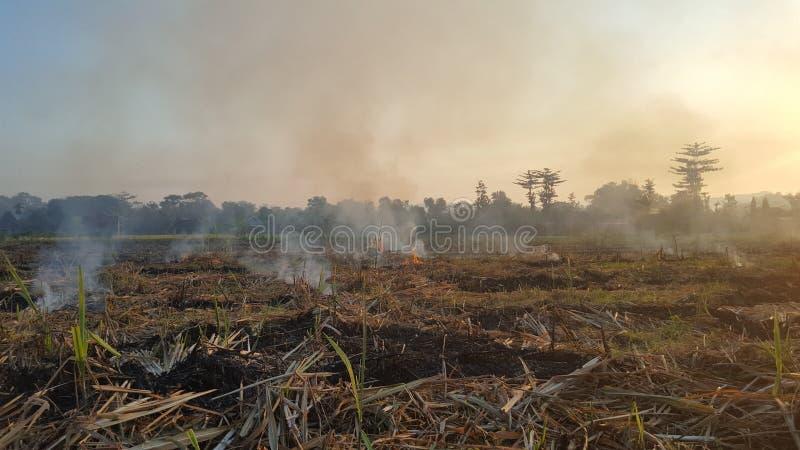 Μια ριπή του καπνού στα αγροκτήματα καλάμων ζάχαρης στοκ φωτογραφίες με δικαίωμα ελεύθερης χρήσης