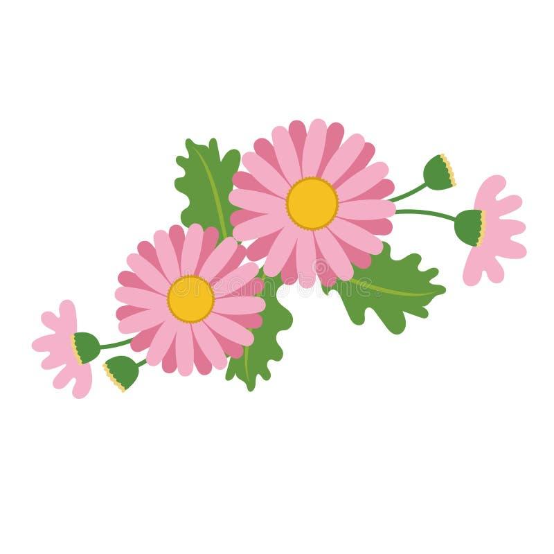 Μια ρόδινη μαργαρίτα λουλουδιών φύσης ελεύθερη απεικόνιση δικαιώματος