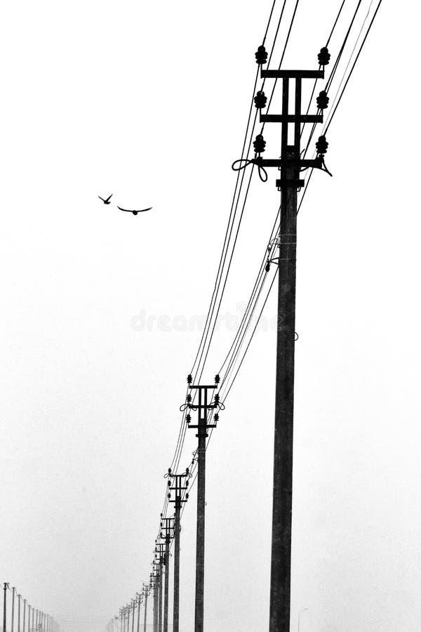 Μια σειρά από πόλους γραμμής ισχύος και δύο ιπτάμενα πτηνά Ασπρόμαυρη φωτογραφία με το στυλ του μινιμαλισμού στοκ φωτογραφία με δικαίωμα ελεύθερης χρήσης