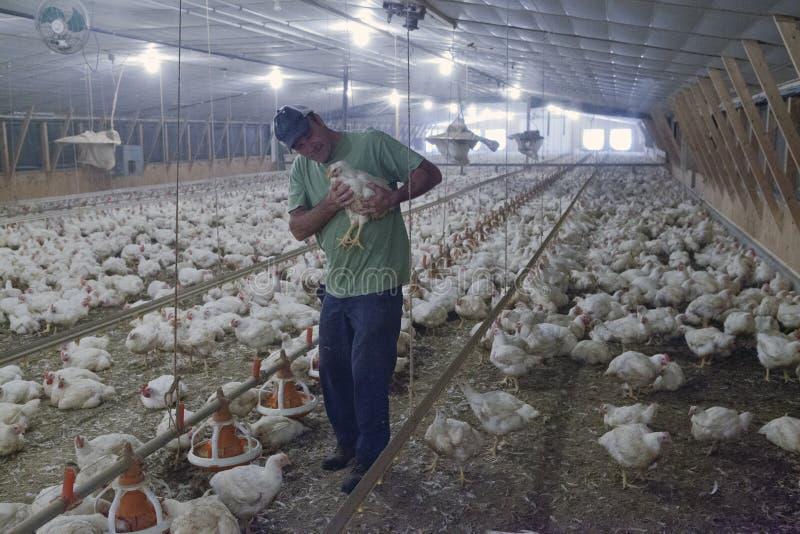 Μια σιταποθήκη κοτόπουλου, Chesapeake στοκ εικόνα με δικαίωμα ελεύθερης χρήσης