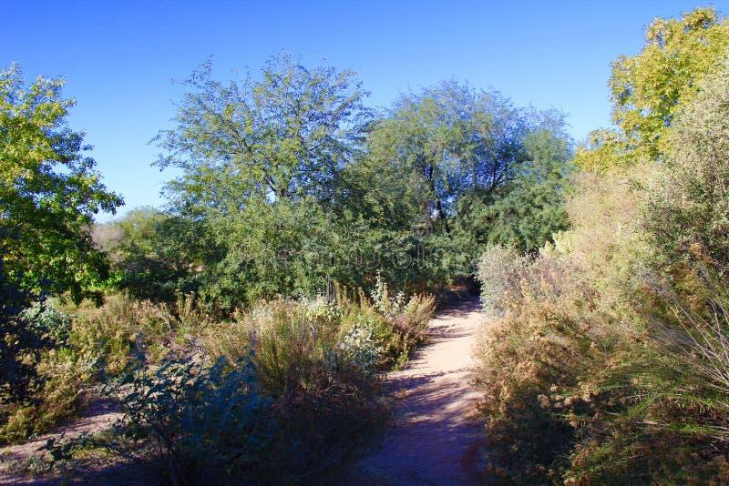 Μια σκιερή πορεία ερήμων στοκ φωτογραφία με δικαίωμα ελεύθερης χρήσης