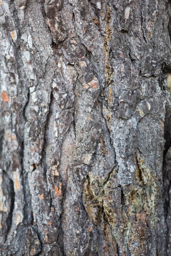 Μια στενή επάνω φωτογραφία της σύστασης φλοιών δέντρων στη Νότια Αυστραλία σε 6ο στοκ φωτογραφία