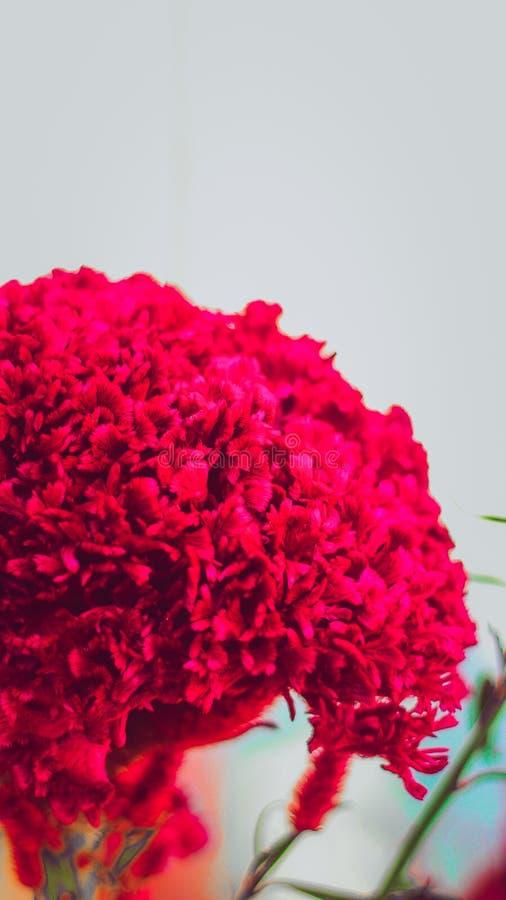 Μια στενή επάνω φωτογραφία του κόκκινου λουλουδιού με το υπόβαθρο θαμπάδων σε ένα πάρκο στοκ εικόνες