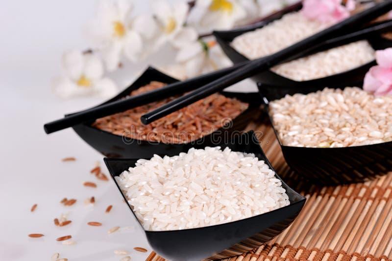 Μια συλλογή των ποικιλιών ρυζιού στοκ εικόνες