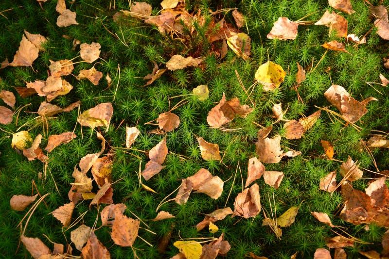 Μια σύνθεση των δασικών βρύων και των φύλλων στοκ φωτογραφία