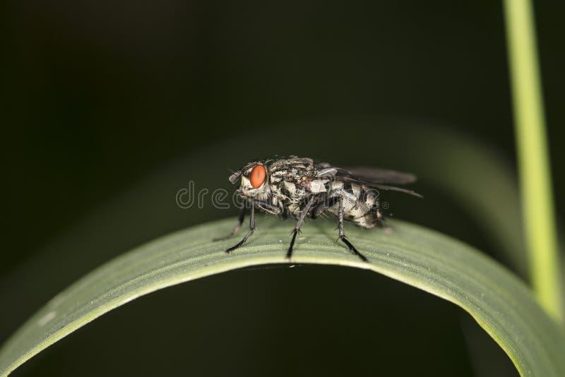 Μια τεράστια μύγα κάθεται στη χλόη στοκ εικόνες