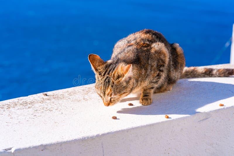 Μια τιγρέ συνεδρίαση γατών και κατανάλωση στον άσπρο τοίχο Oia, Santorini στοκ εικόνες