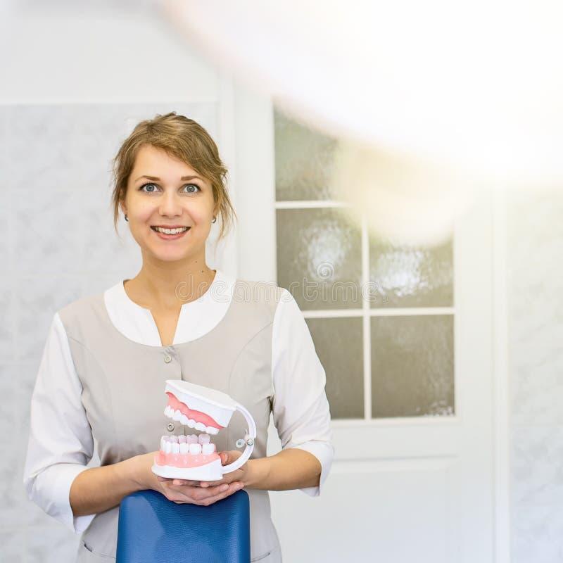 Μια υποδοχή στο γραφείο του οδοντιάτρου, ο γιατρός παρουσιάζει σαγόνι κατάρτισης στοκ φωτογραφία