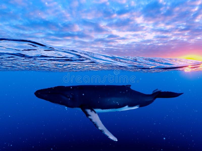 Μια φάλαινα Humpback ελεύθερη απεικόνιση δικαιώματος