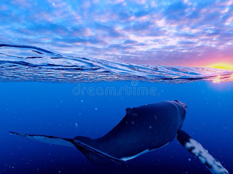 Μια φάλαινα Humpback διανυσματική απεικόνιση