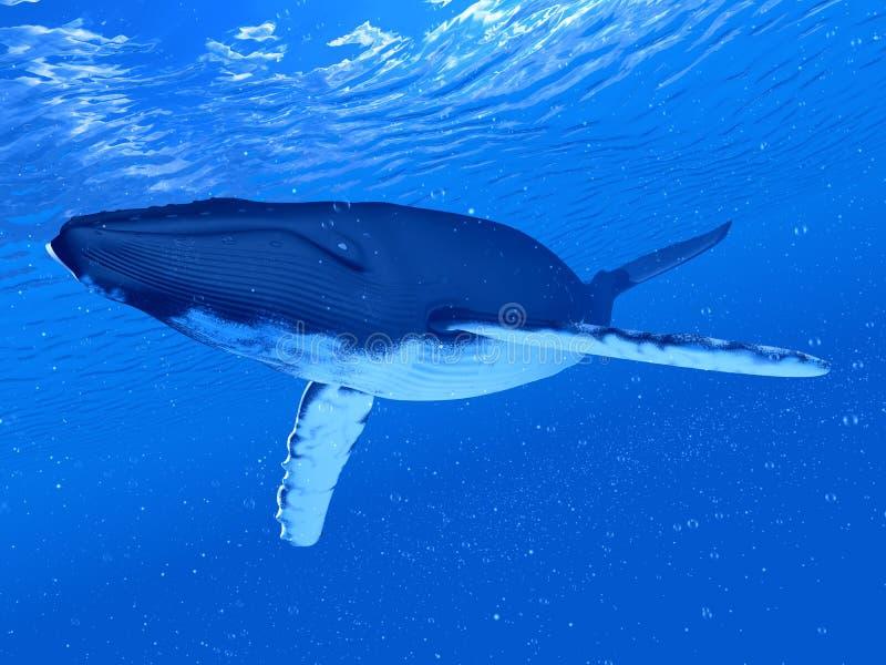 Μια φάλαινα Humpback απεικόνιση αποθεμάτων