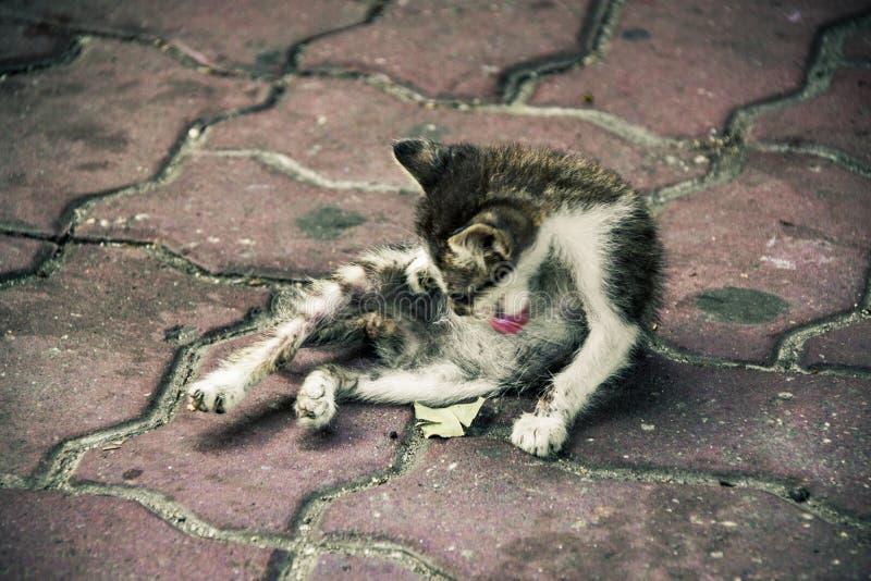 Μια φτωχή γάτα που καθαρίζει it& x27 σώμα του s στοκ εικόνες