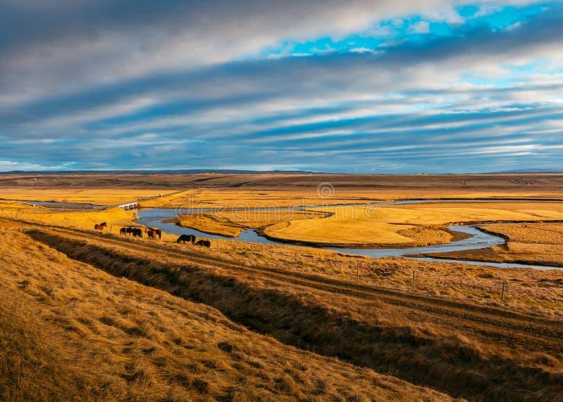 Μια φυλή των άγριων αλόγων που τρώνε τη χλόη σε έναν τομέα στοκ εικόνες