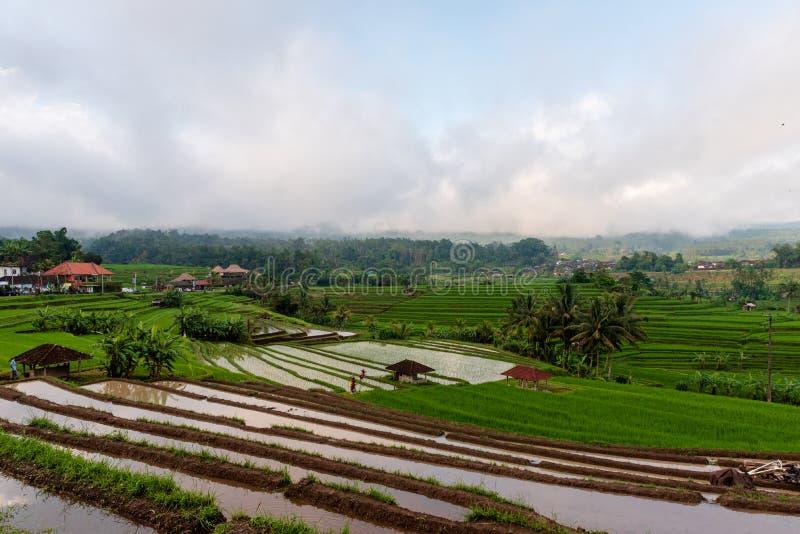 Μια φωτογραφία που αγνοεί τους Terraced τομείς ρυζιού στοκ εικόνες