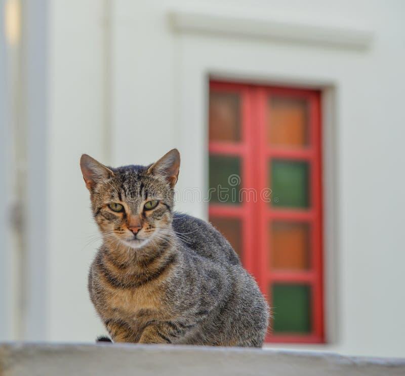 Μια χαλάρωση γατών στην παλαιά πόλη στοκ εικόνα με δικαίωμα ελεύθερης χρήσης