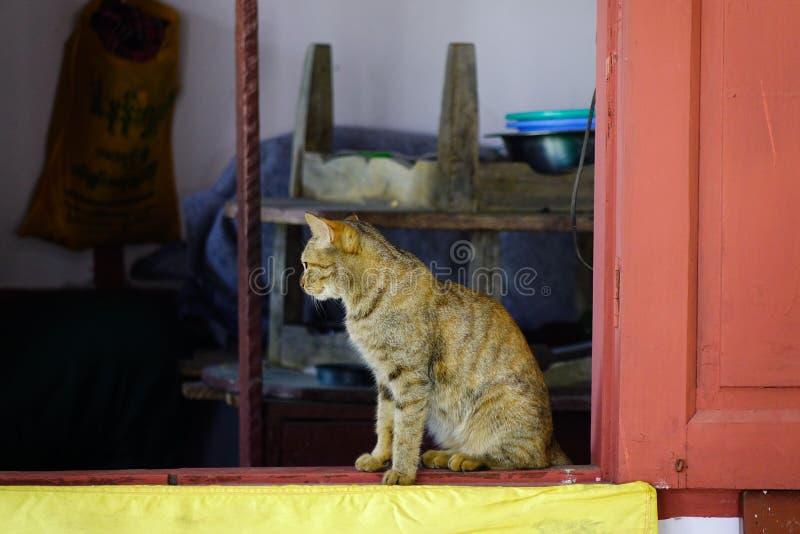 Μια χαριτωμένη χαλάρωση γατών στο αγροτικό σπίτι στοκ εικόνες