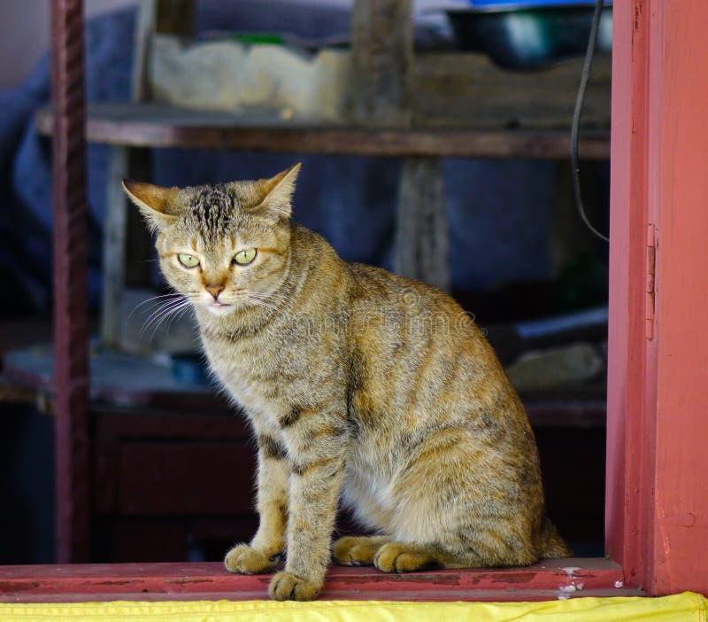 Μια χαριτωμένη χαλάρωση γατών στο αγροτικό σπίτι στοκ εικόνα με δικαίωμα ελεύθερης χρήσης