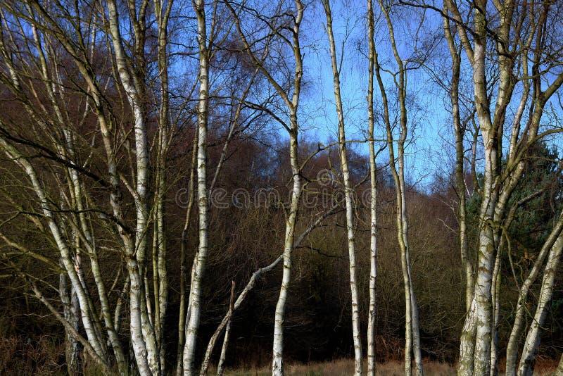 Μια χειμερινή δασόβια σκηνή στοκ εικόνες με δικαίωμα ελεύθερης χρήσης