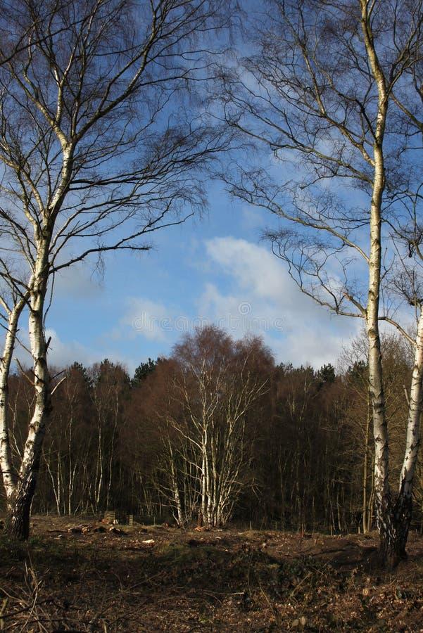 Μια χειμερινή δασόβια σκηνή στοκ φωτογραφία με δικαίωμα ελεύθερης χρήσης