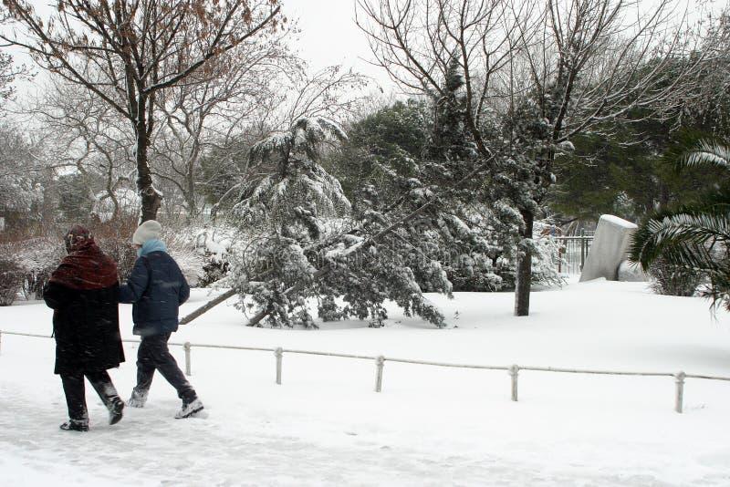 Μια χιονώδης ημέρα και ένα σπασμένο δέντρο στοκ φωτογραφία με δικαίωμα ελεύθερης χρήσης