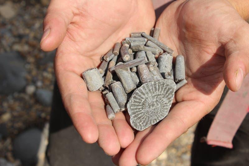 Μια χούφτα απολιθώματα στοκ φωτογραφίες