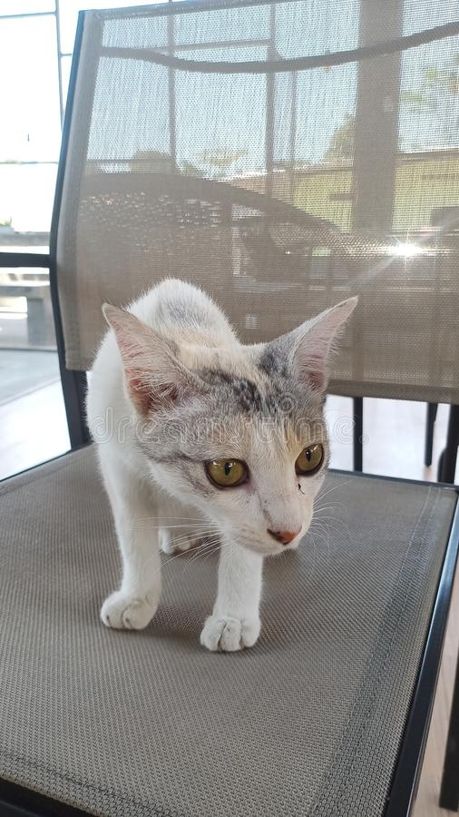 Μια όμορφη γάτα που χαλαρώνει μόνο να κοιτάξει επίμονα σε ένα καφετί ξύλινο πάτωμα στοκ εικόνα με δικαίωμα ελεύθερης χρήσης