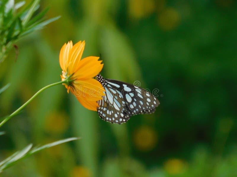 Μια όμορφη εικόνα μιας πεταλούδας στοκ φωτογραφίες με δικαίωμα ελεύθερης χρήσης