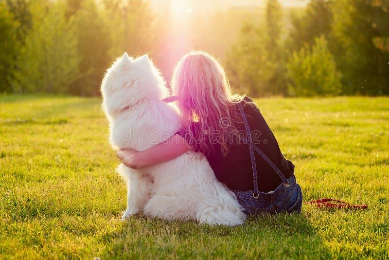 Μια όμορφη όμορφη ξανθιά χαμογελαστή ευτυχισμένη νεαρή γυναίκα με τζιν σορτσάκια αγκαλιάζει ένα λευκό, χνουδωτό, χαριτωμένο, σαμο στοκ εικόνα