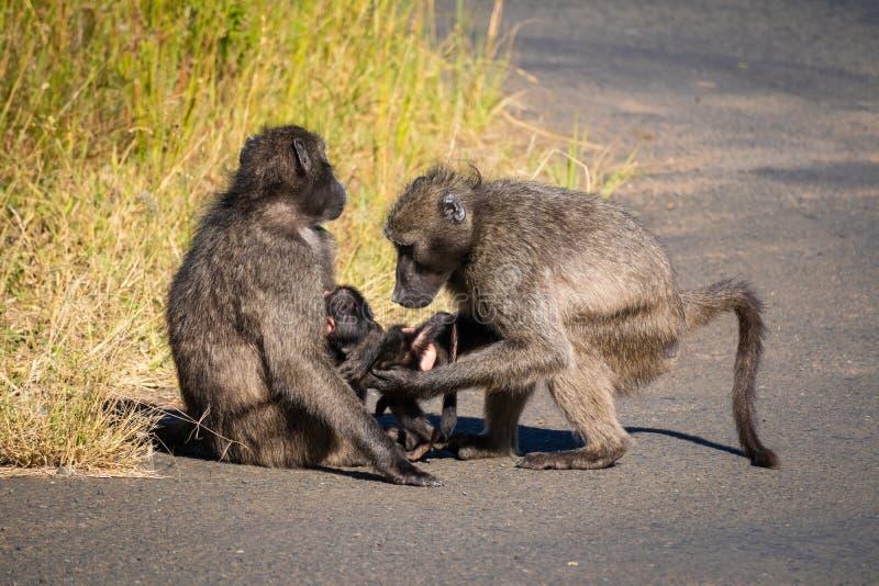 Μια baboon οικογένεια με το μωρό του στοκ εικόνες